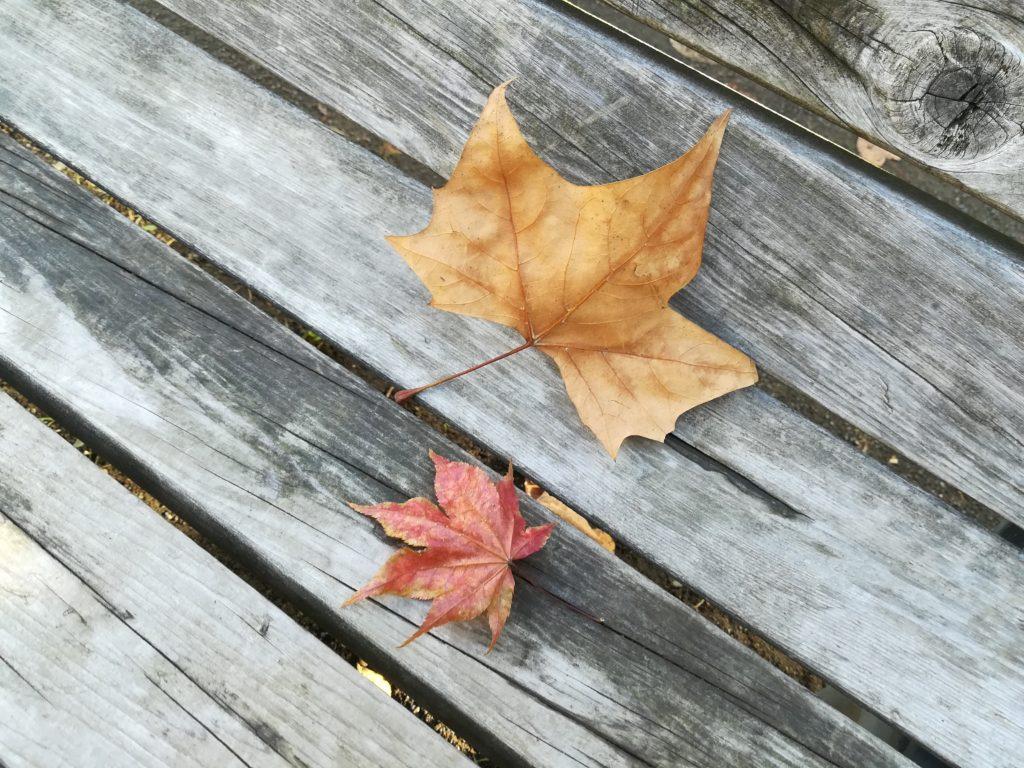 nova liteで撮影した紅葉