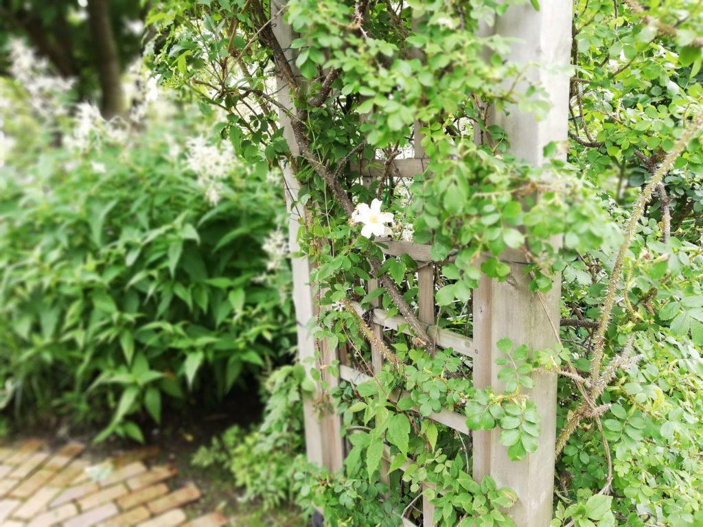 柱に咲いている一輪の花