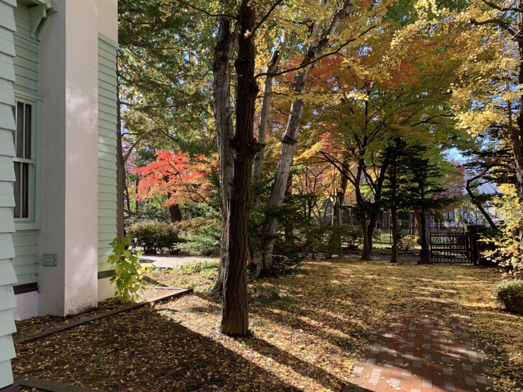 木陰での紅葉(iPhone XR)